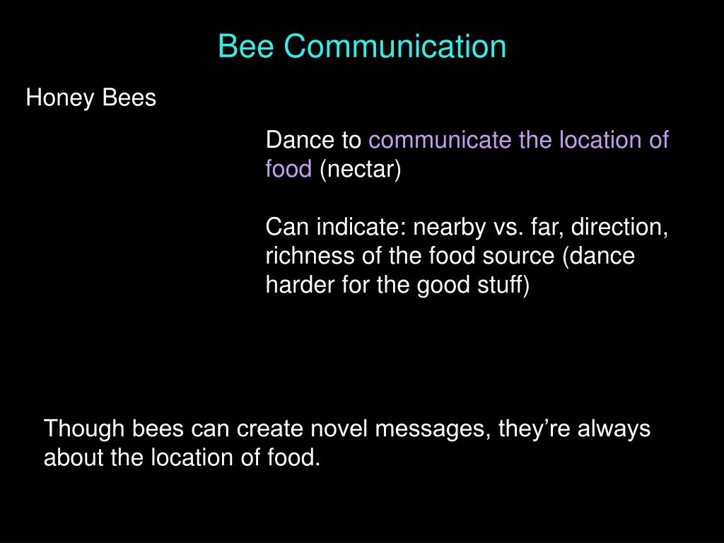 Bee Communication