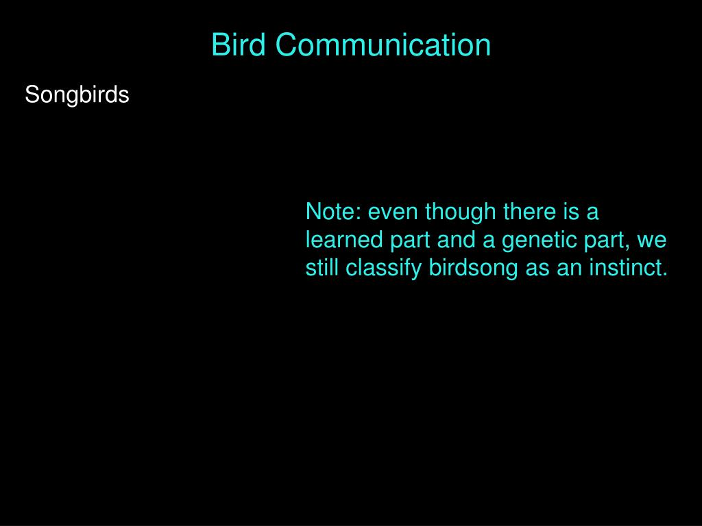 Bird Communication