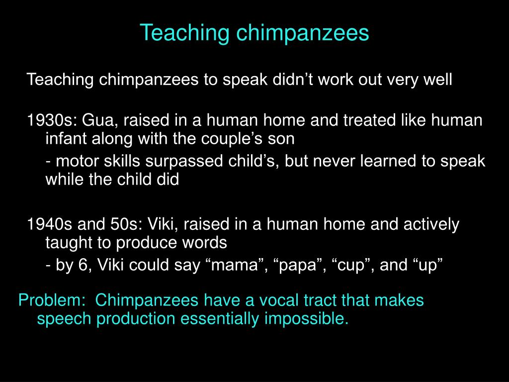 Teaching chimpanzees