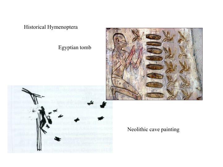 Historical Hymenoptera