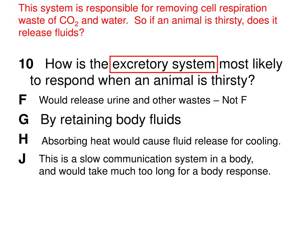 This system is responsible for removing cell respiration waste of CO