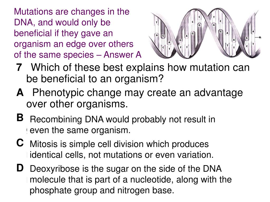 Mutations are changes in the DNA, and would only be beneficial if they gave an organism an edge over others of the same species – Answer A