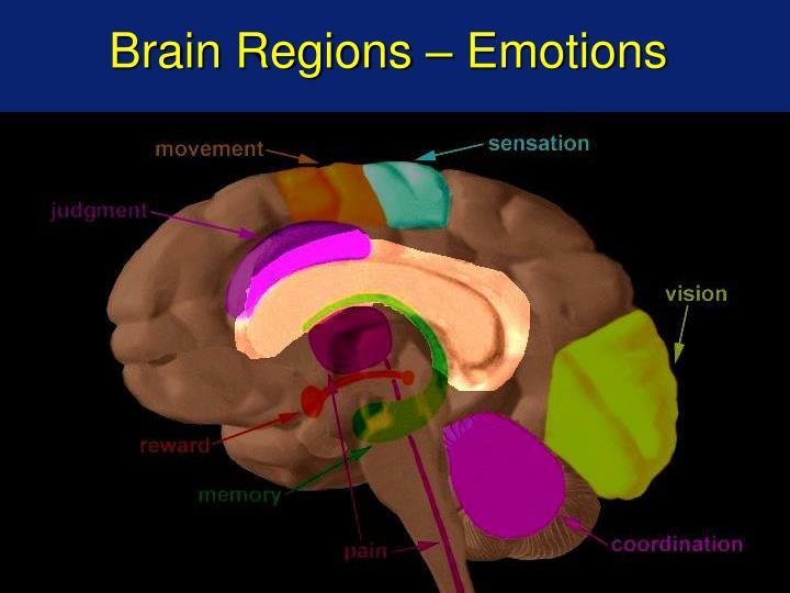 Brain Regions – Emotions