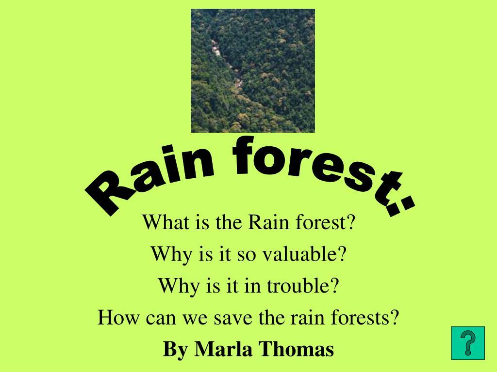 Rain forest: