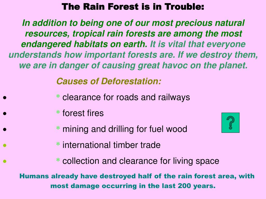 The Rain Forest is in Trouble: