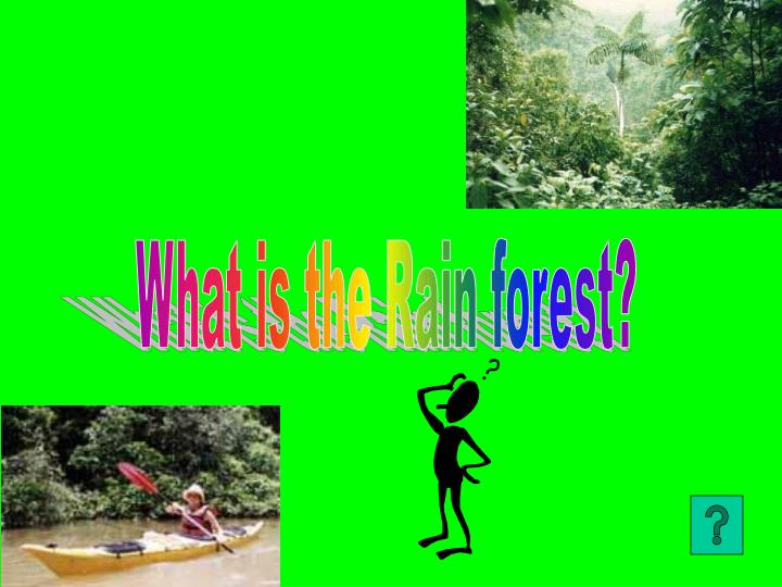 What is the Rain forest?