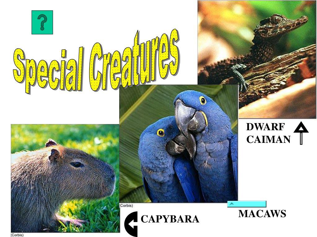 Special Creatures