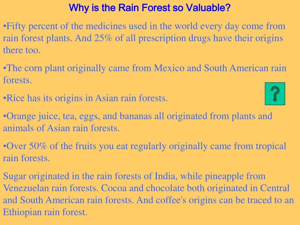 Why is the Rain Forest so Valuable?