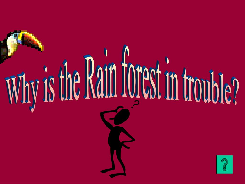 Why is the Rain forest in trouble?