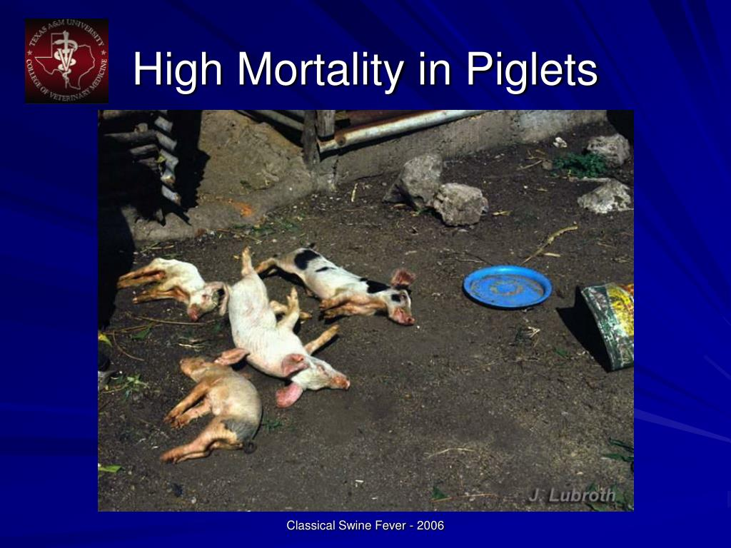 High Mortality in Piglets