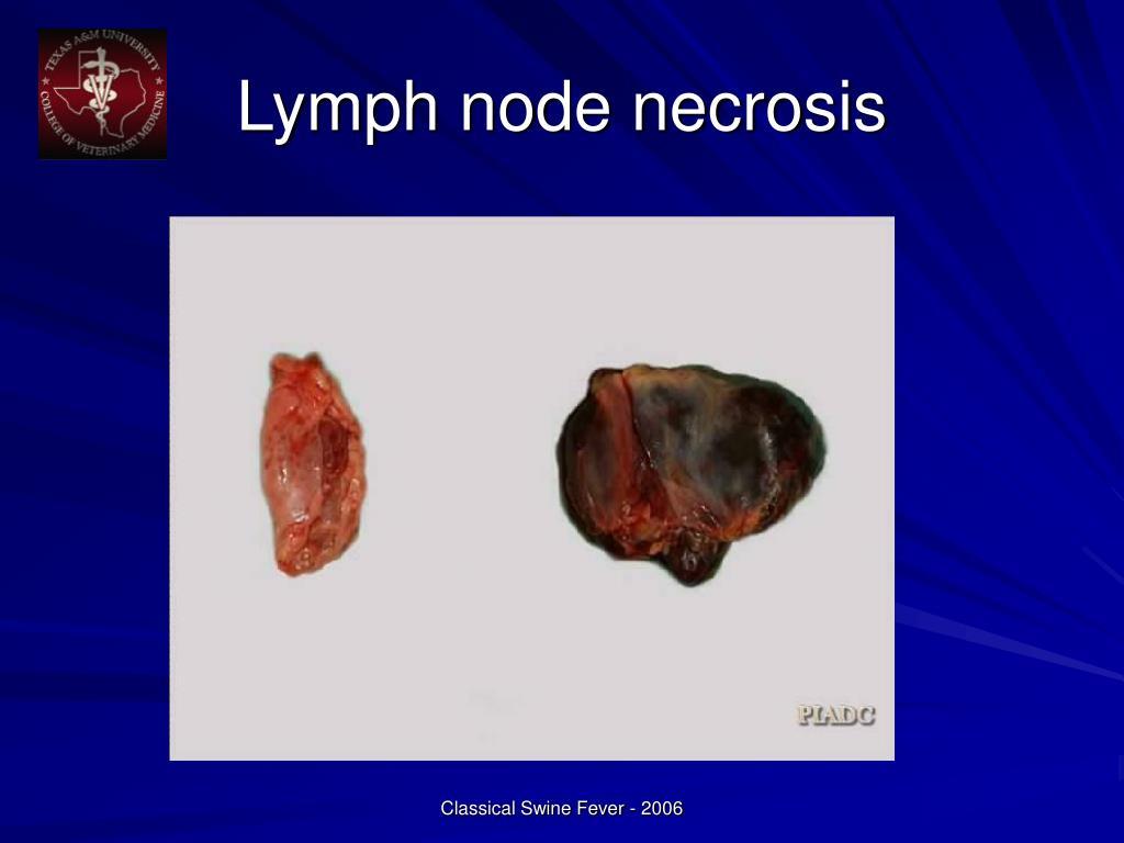 Lymph node necrosis