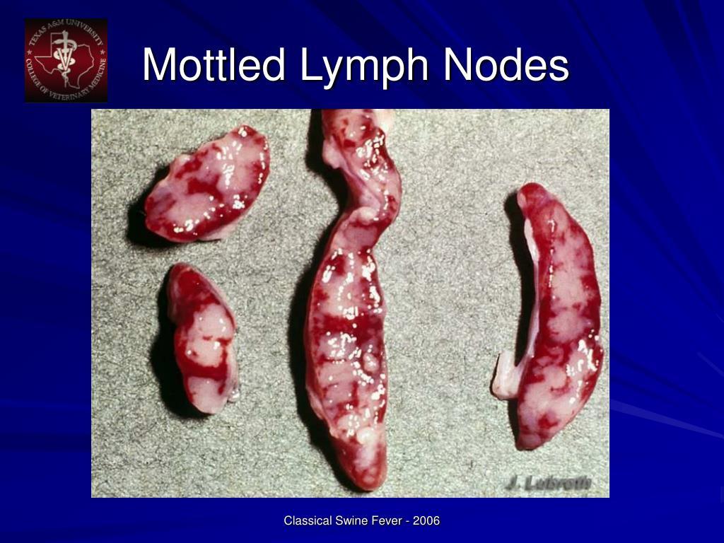 Mottled Lymph Nodes