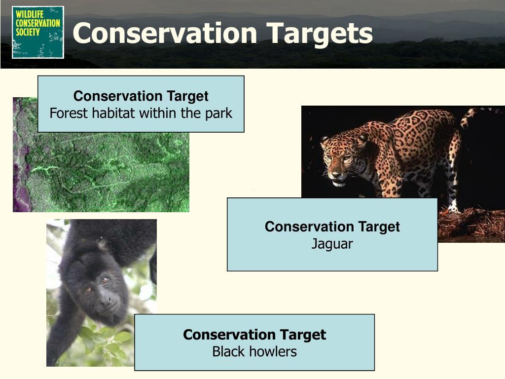 Conservation Targets