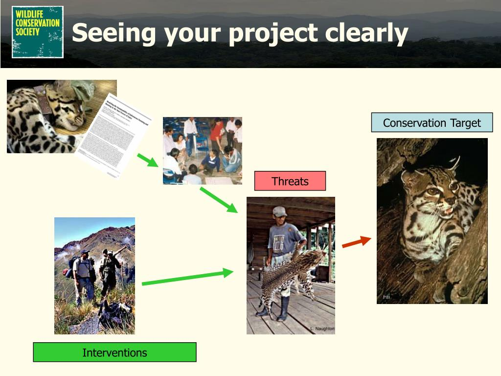 Seeing your project clearly