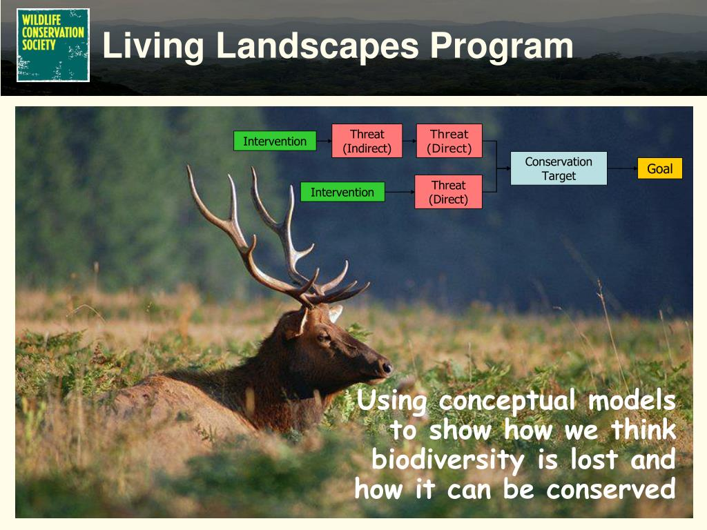 Using conceptual models to show how we think biodiversity is lost and how it can be conserved