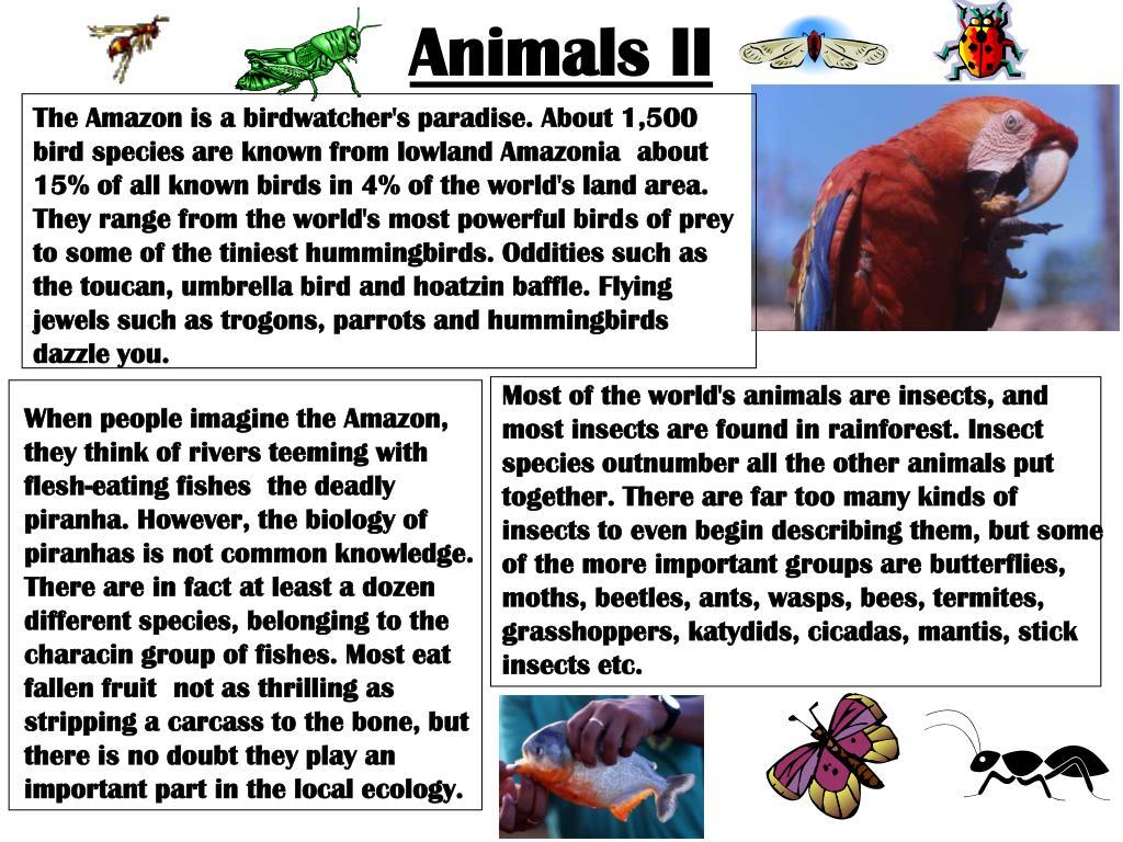 Animals II
