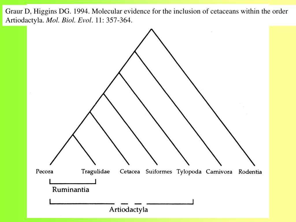 Graur D, Higgins DG. 1994. Molecular evidence for the inclusion of cetaceans within the order Artiodactyla.