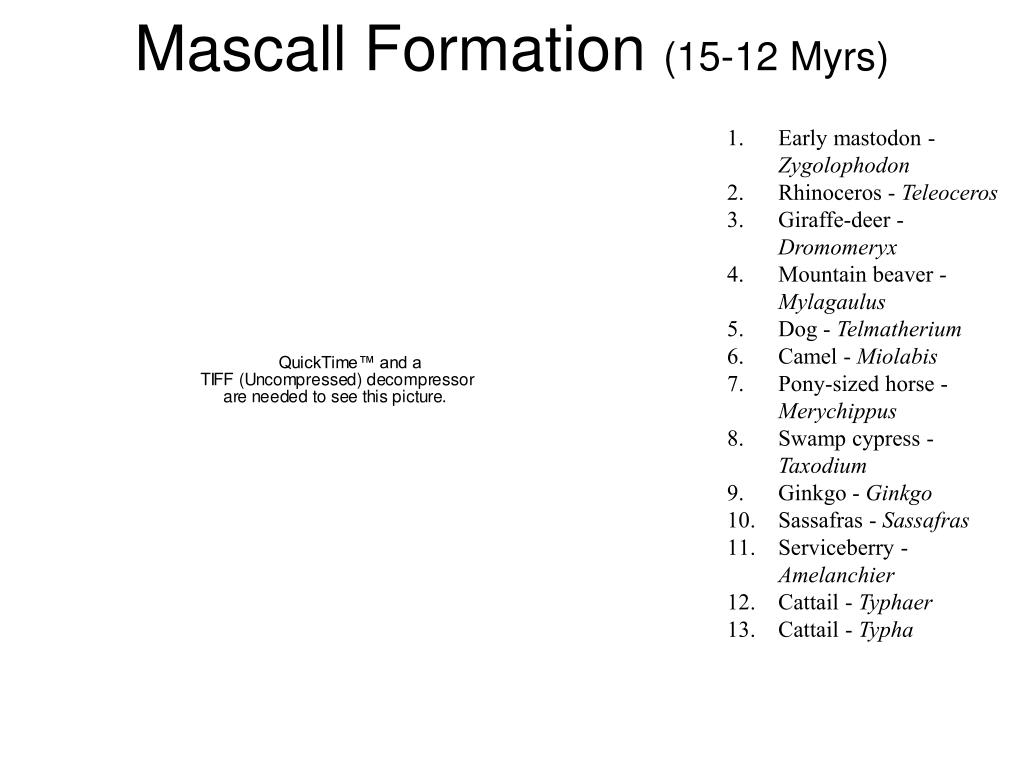 Mascall Formation
