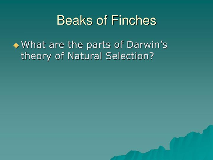 Beaks of Finches