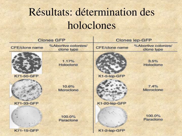 Résultats: détermination des holoclones