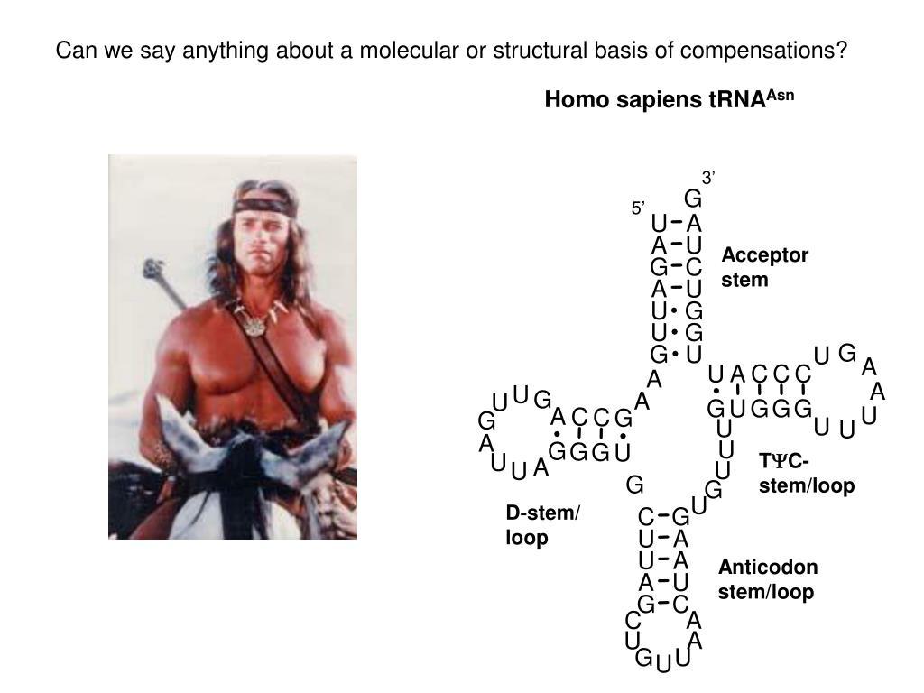 Homo sapiens tRNA
