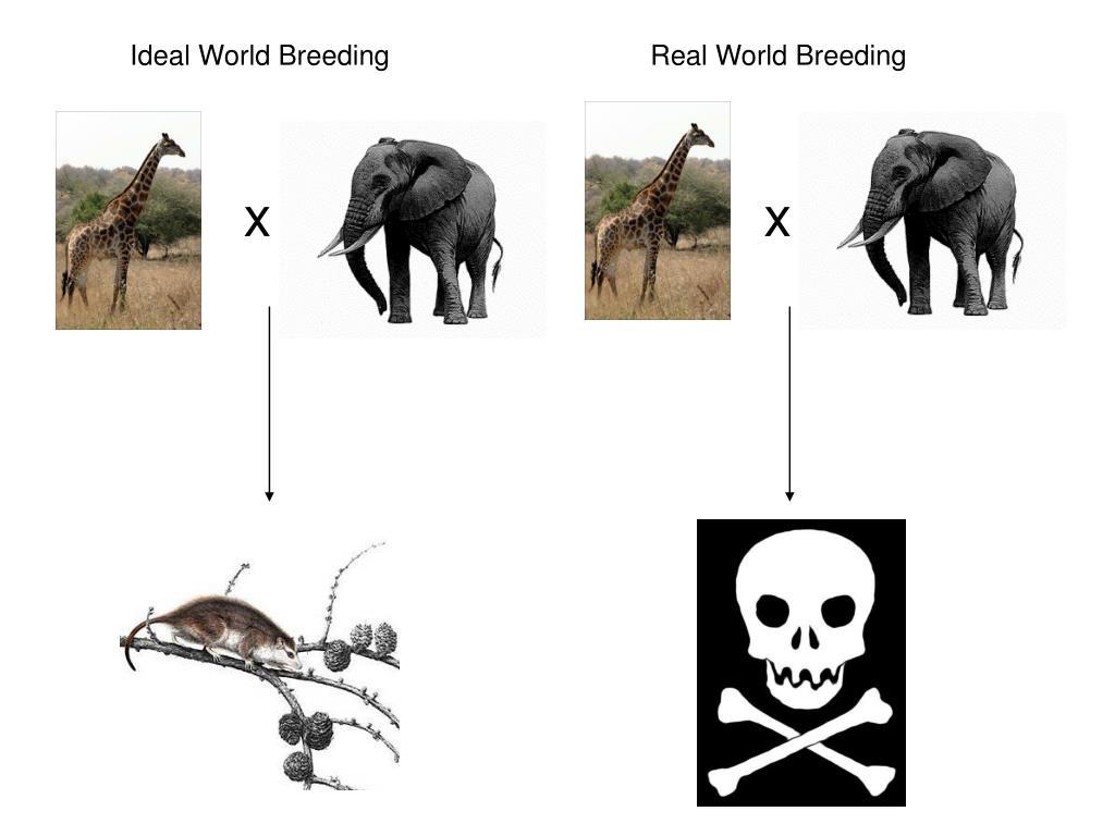 Ideal World Breeding