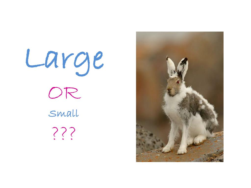 large or small