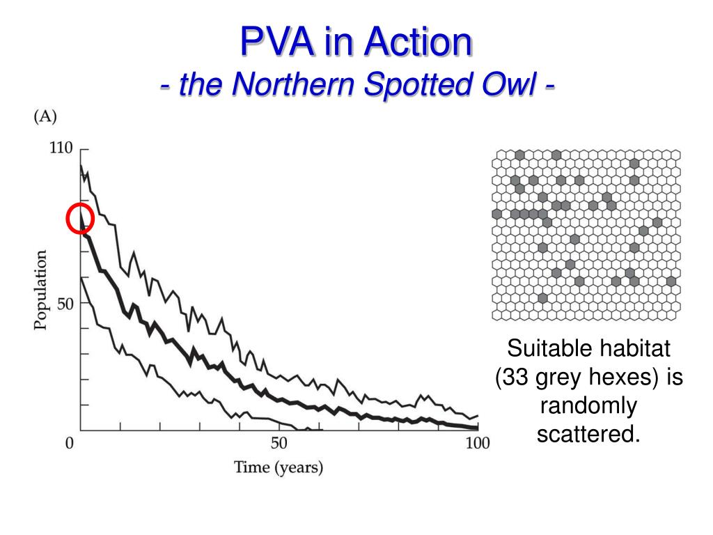 PVA in Action