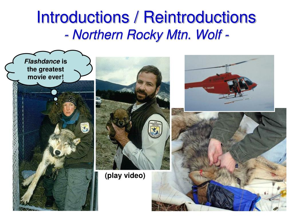 Introductions / Reintroductions