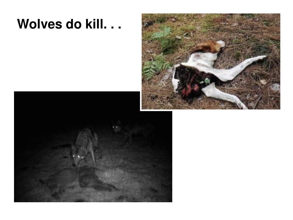 Wolves do kill. . .