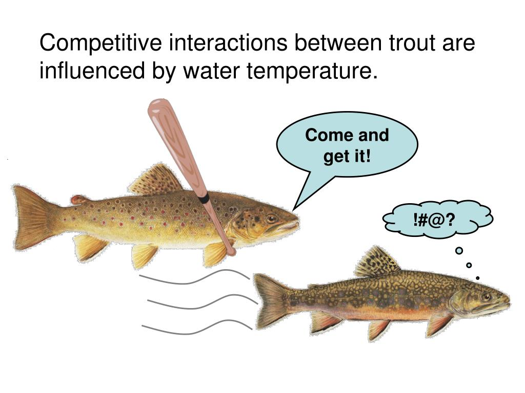 Competitive interactions between trout are influenced by water temperature.