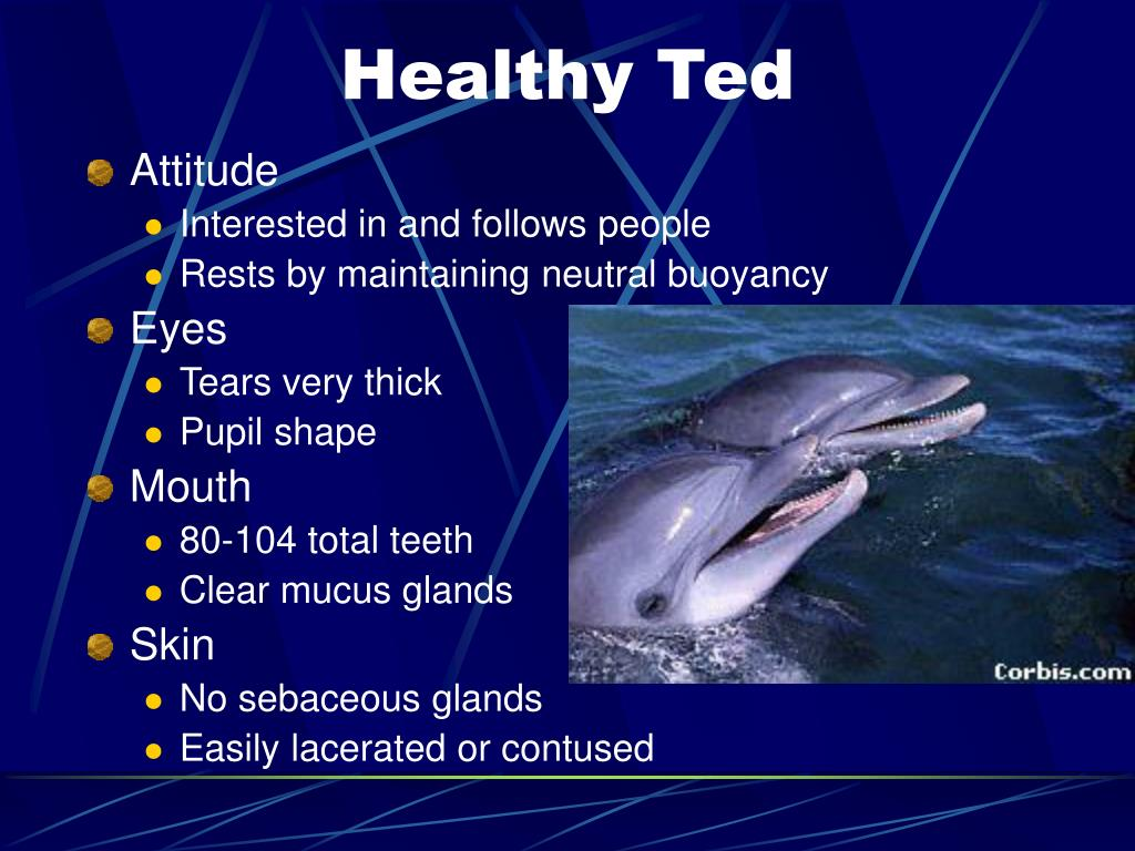 Healthy Ted