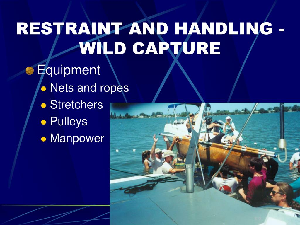RESTRAINT AND HANDLING - WILD CAPTURE