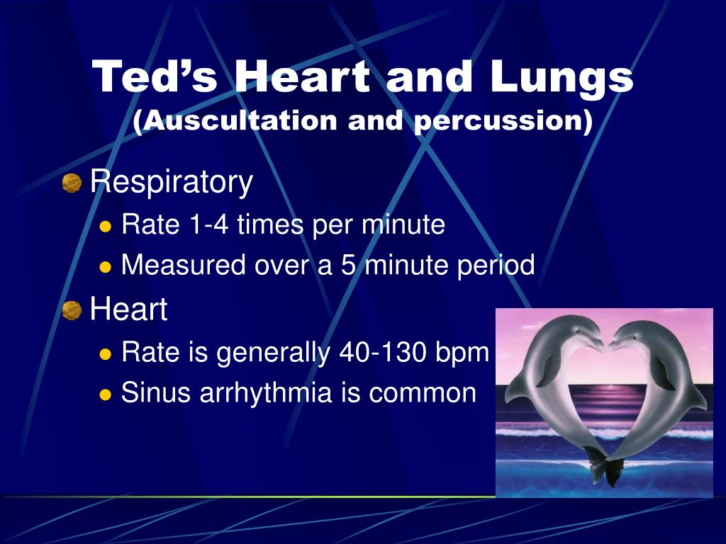 Ted's Heart and Lungs