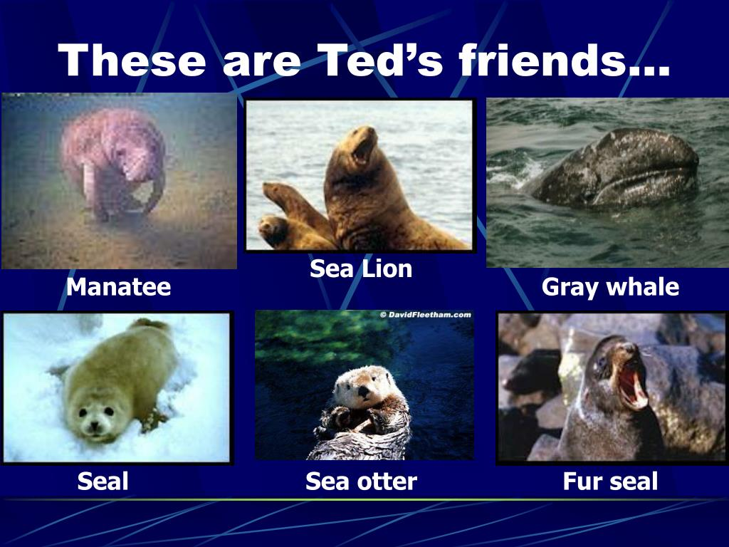 These are Ted's friends…