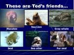 these are ted s friends