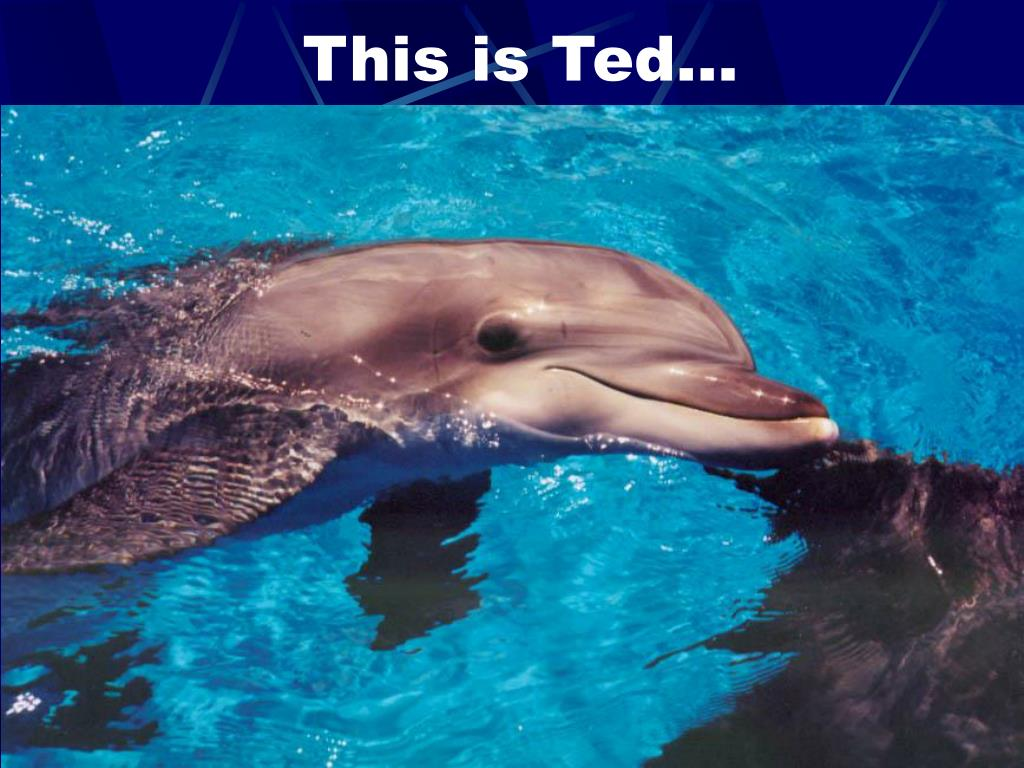 This is Ted…