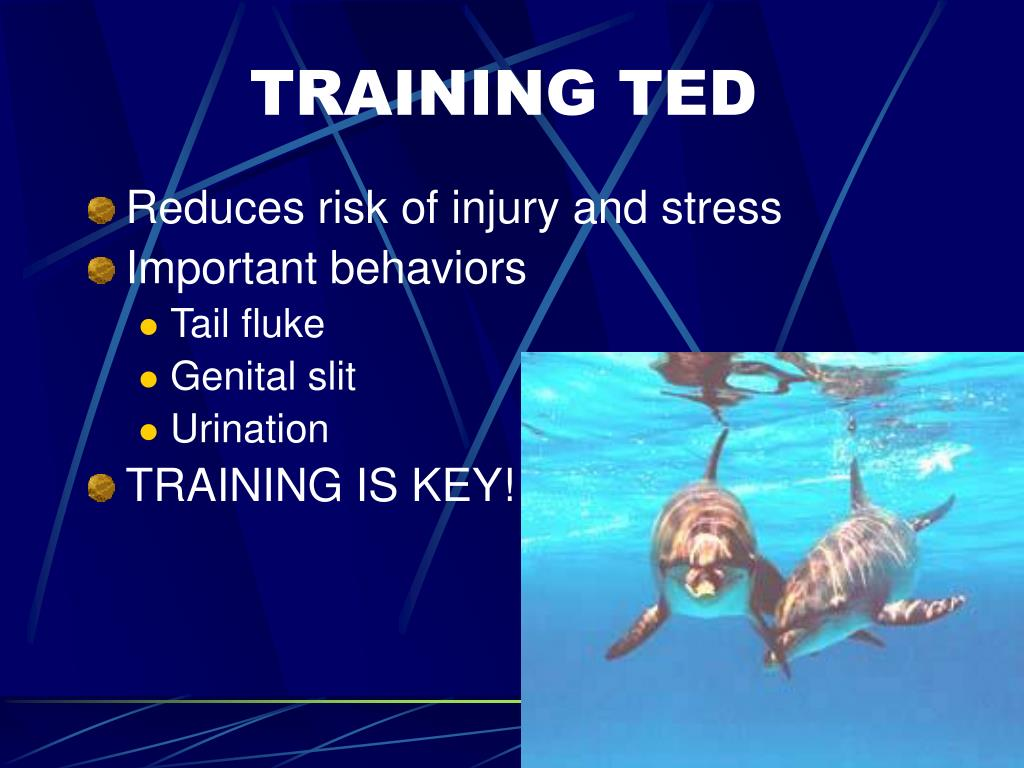 TRAINING TED