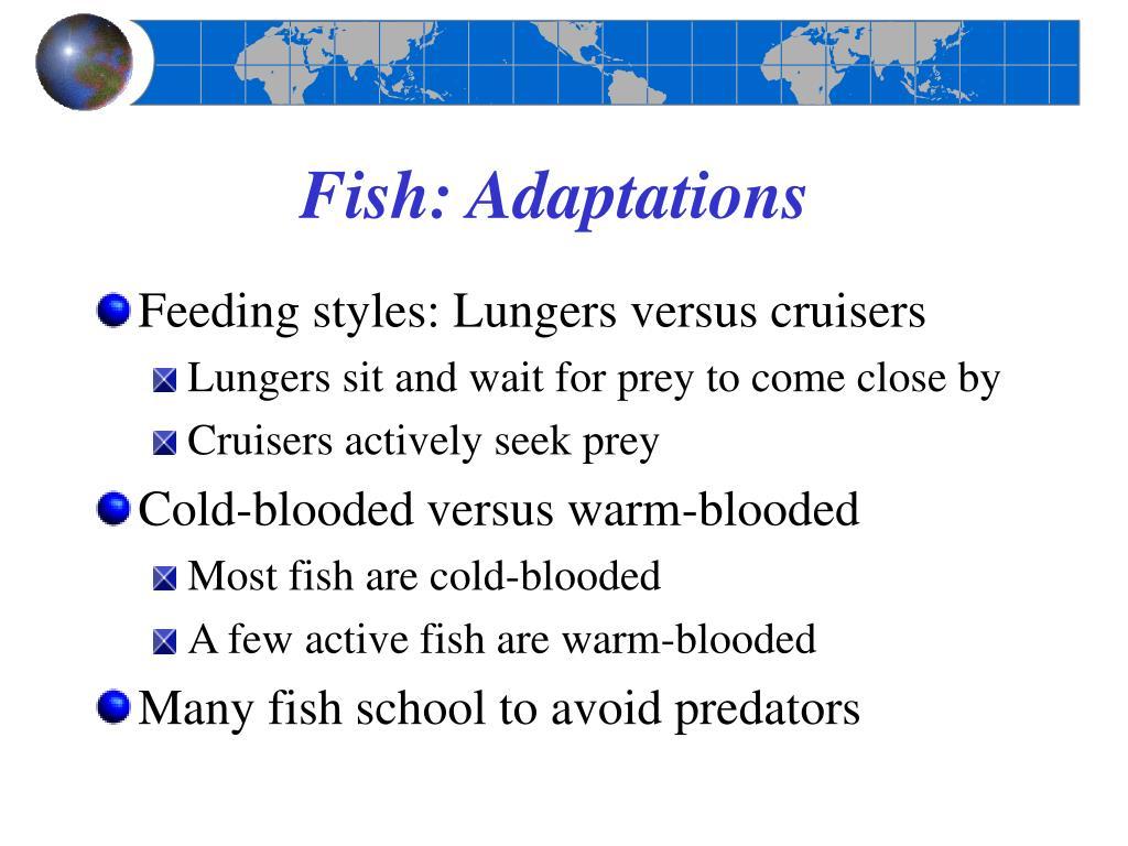 Fish: Adaptations