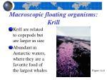 macroscopic floating organisms krill