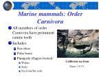 marine mammals order carnivora