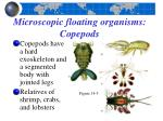 microscopic floating organisms copepods