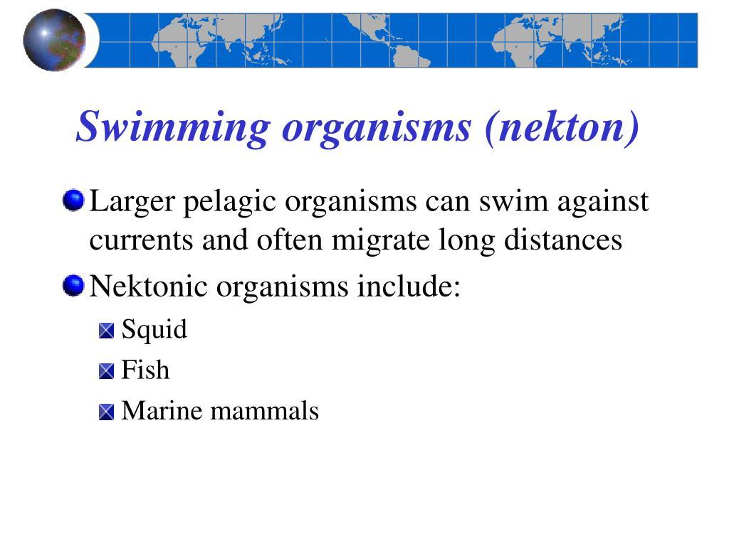 Swimming organisms (nekton)