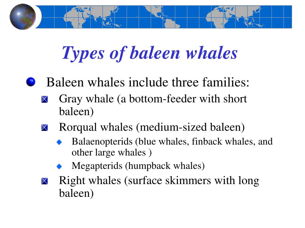 Types of baleen whales