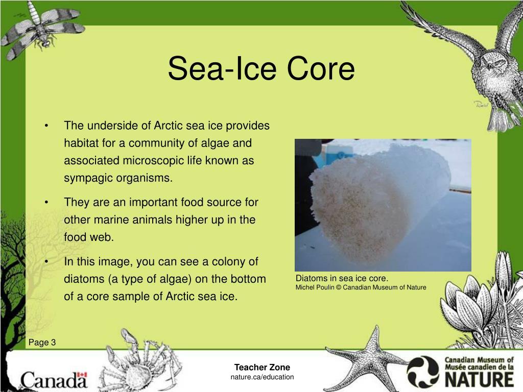 Sea-Ice Core