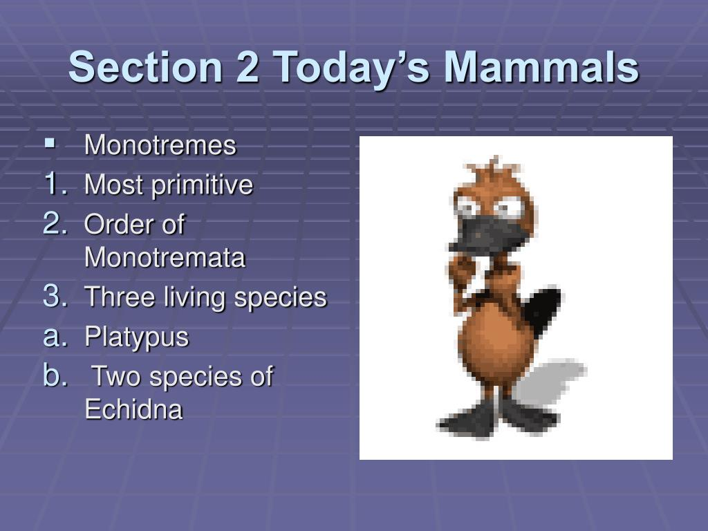 Section 2 Today's Mammals
