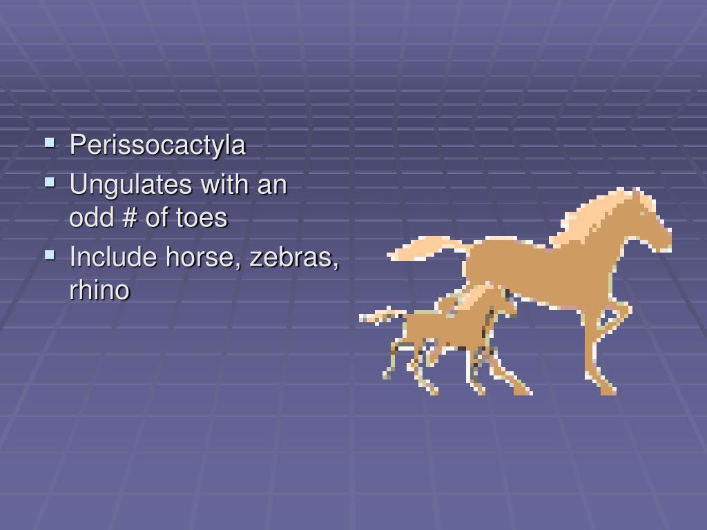 Perissocactyla