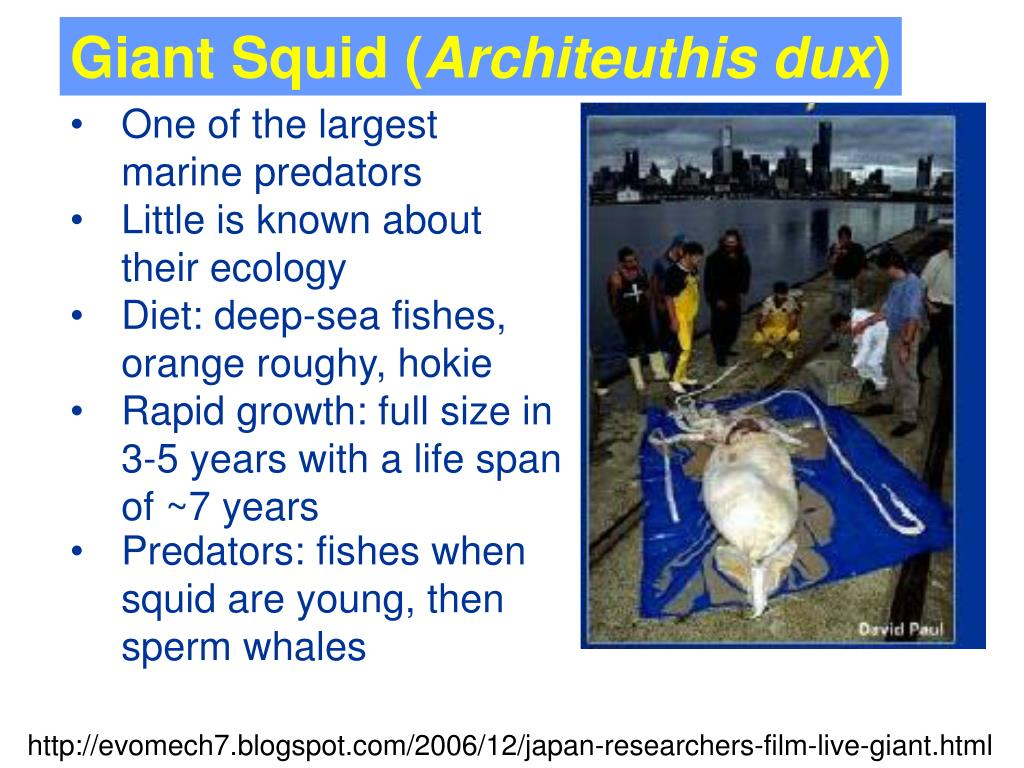 Giant Squid (