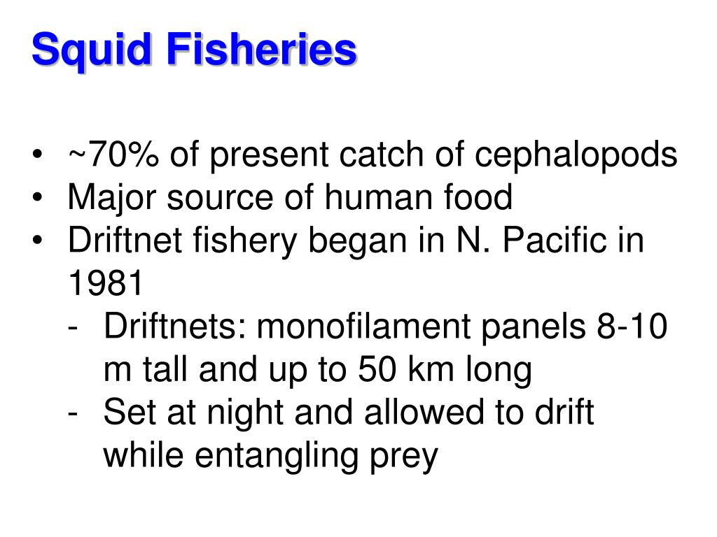 Squid Fisheries