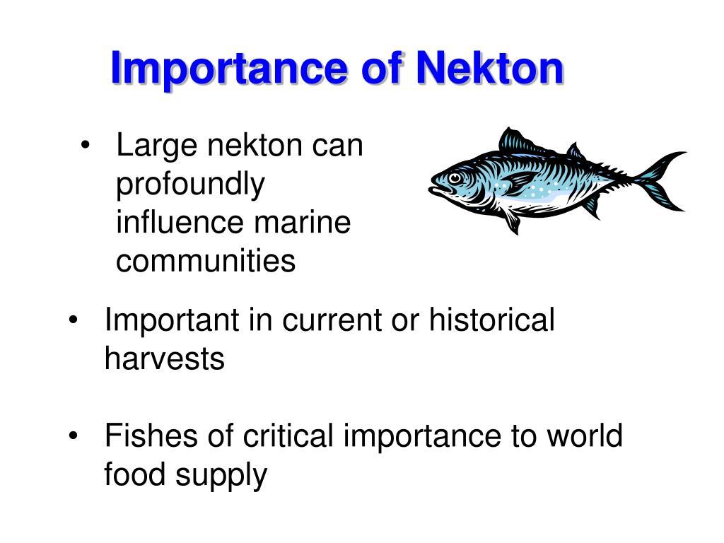 Importance of Nekton